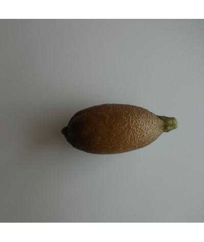 CITRON CAVIAR a fruit jaune / Microcitrus