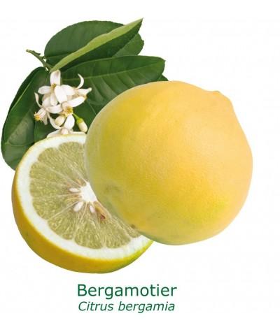 BERGAMOTIER  / Citrus bergamia