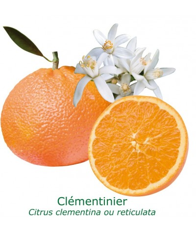 CLEMENTINIER / Citrus clementina