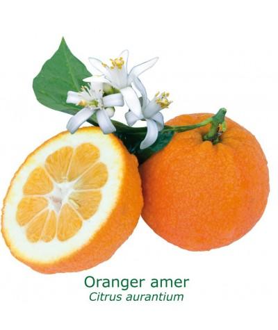 ORANGER AMER /BIGARADIER / Citrus aurantium salicifolia
