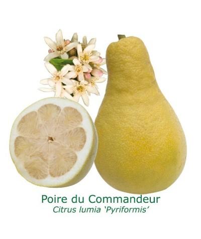 POIRE DU COMMANDEUR / Citrus Lymia