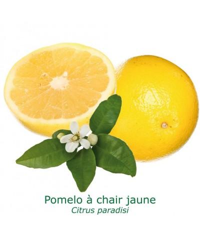 POMELOS JAUNE / Citrus paradisi